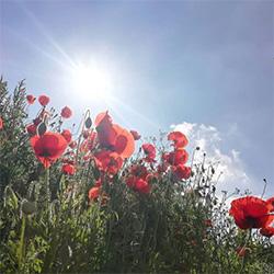 Blommor i högt gräs