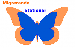 jmf migrerande och stationär monark